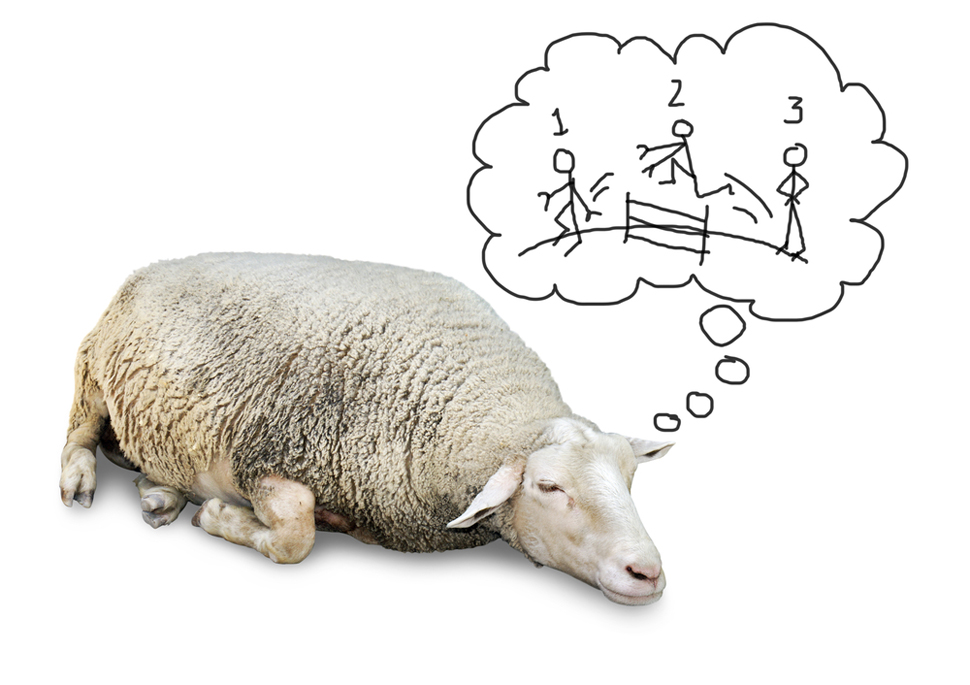 Insomnia ... Counting Sheep