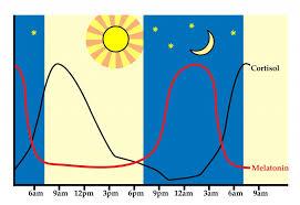 Sleep Cortisol Cycle